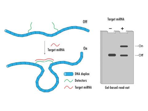 ДНК-нанопереключатели для высокочувствительной детекции вирусной РНК