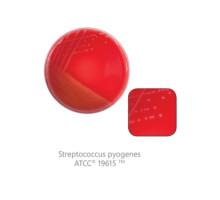 CM0854-1-SF Агар с 5% бараньей крови