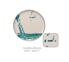 CM1002-1-SF Агар хромогенный для Candida