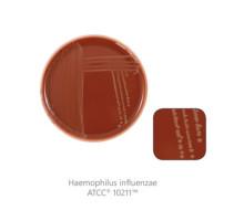 CM0367-1-SF Агар шоколадный с факторами роста