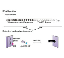 Набор TeloTAGGG Telomere Length Assay, для 50 измерений, -20 С, Roche
