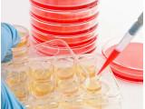 Среды и растворы для клеточных культур